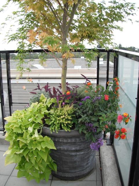 Rooftop Terrace contemporary-landscape