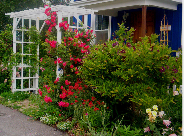 Front Yard Landscaping Roses : Traditional landscape toronto by flowers in the front yard