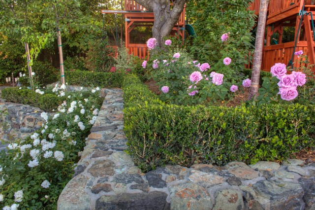 Landscaping With Boxwoods And Roses : Roses and boxwood hedge traditional landscape san