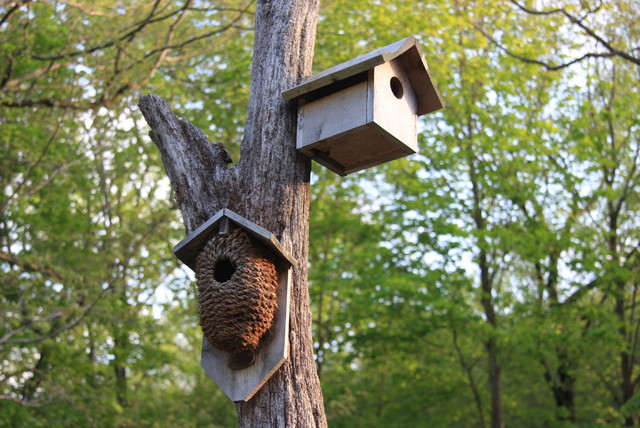 Post your bird houses on some dead tree limbs! rustic-landscape