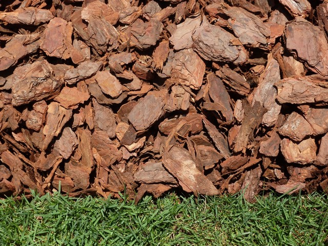 Rustic Mini Pine Bark Nuggets - Landscape - orlando - by Major Mulch ...