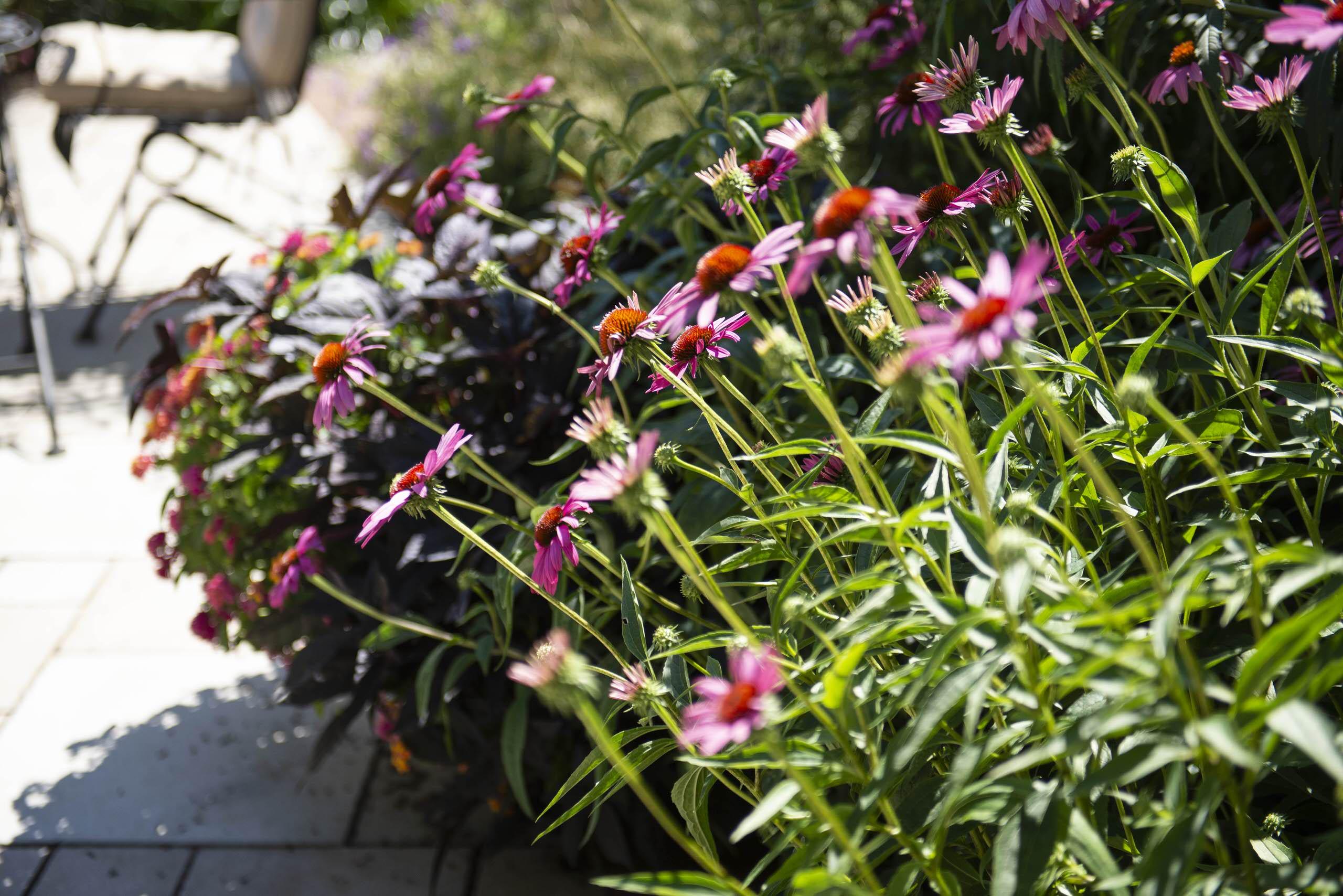 Rustic Perennial Garden - Cedarburg