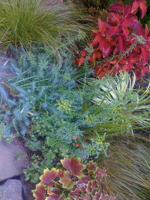 San Rafael Low Water Plant Choices contemporary-landscape