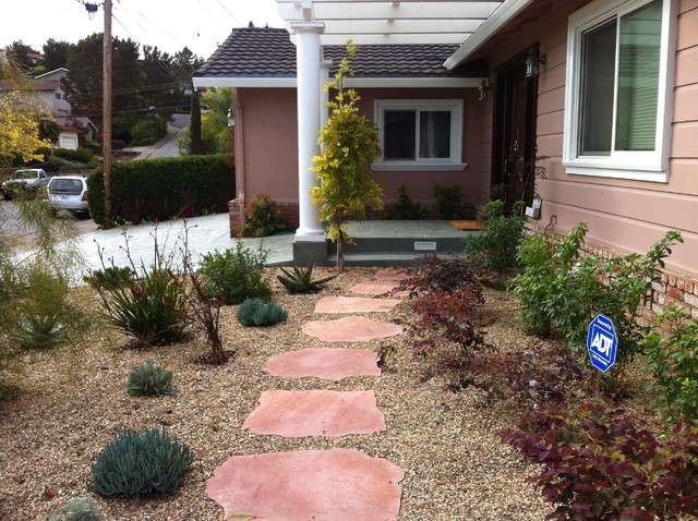 San rafael low water plant choices mediterranean for Low water landscaping plants