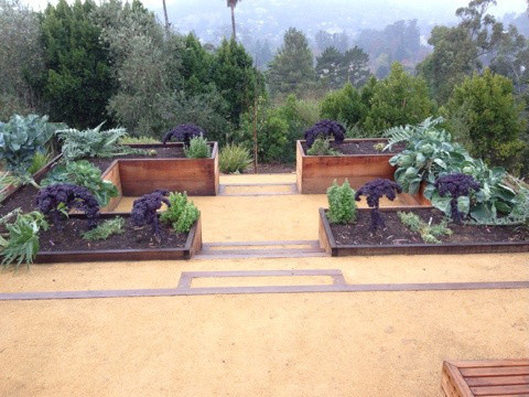 San Rafael Raised Beds and More contemporary-landscape