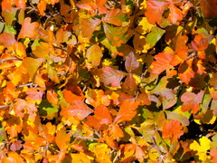 Southwest Gardener's November Checklist