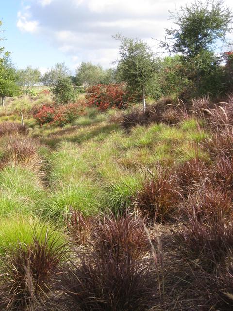 Santa Luz California Ranch traditional-landscape