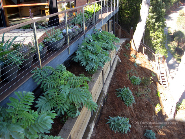 Garden Design On Steep Slopes sausalito - plantings for a steep slope and rows of succulents