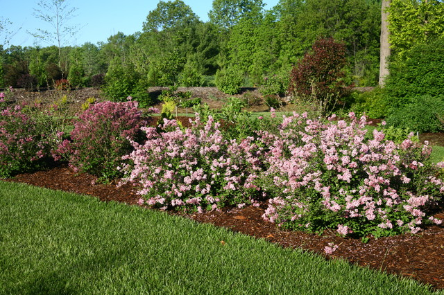 Scent And Sensibility Pink Lilac Eclectic Landscape
