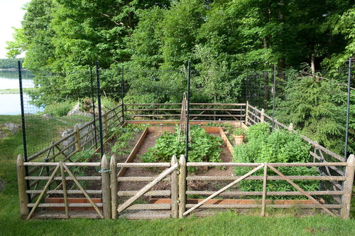 Enclosed vegetable garden with iron screens above the wooden fence.
