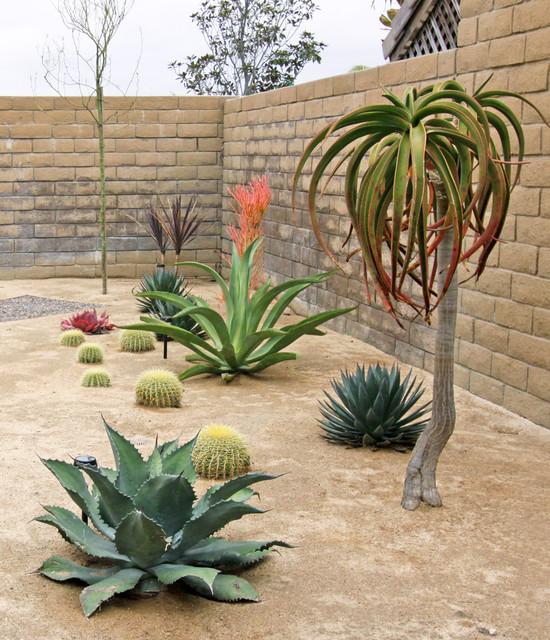 Sculptural Plants in Xeroscape Garden southwestern-landscape