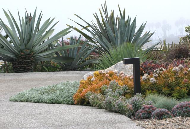 Colorful succulent gardens
