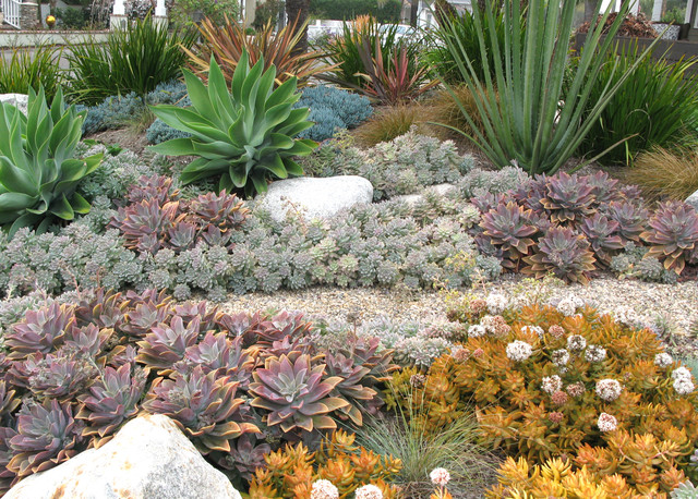 Seaside Colorful Succulent Garden Contemporary Garden