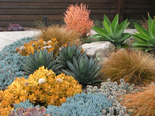 Seaside Colorful Succulent Garden Contemporary Landscape