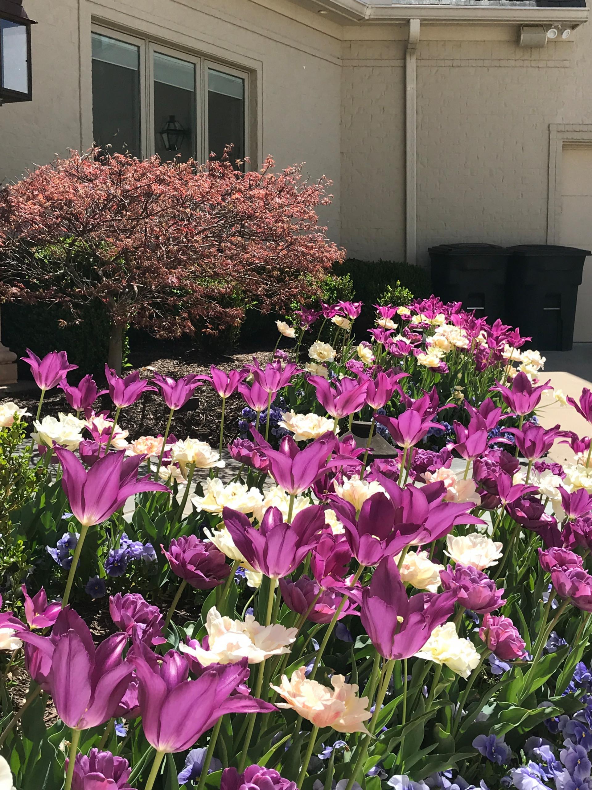 Seasonal Color and Flower Plantings