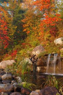 4 Elements of a Stunning Fall Garden