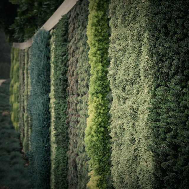 Seasons Living Wall Beverly Hills eclectic-landscape