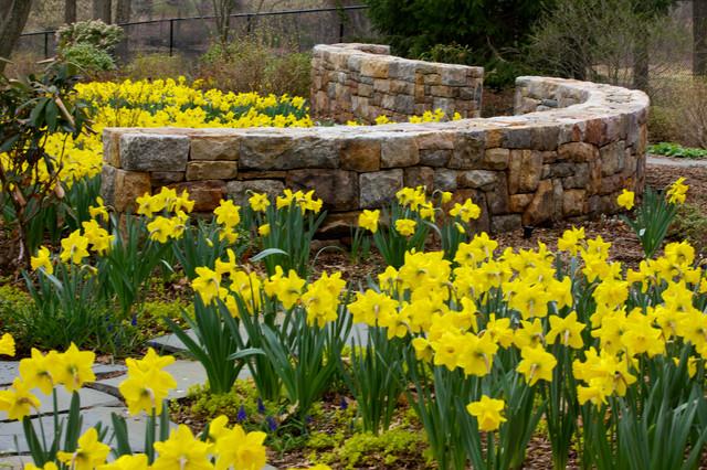 Serpentine Woodland Wall Amongst Daffodils Traditional