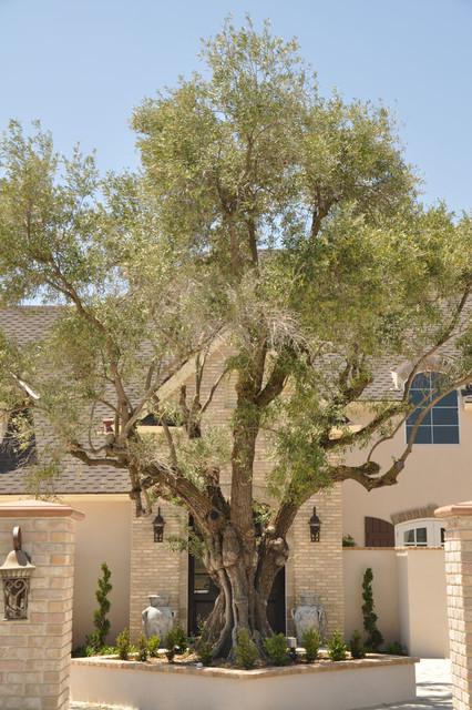 Sevillano Olive Tree Traditional landscape