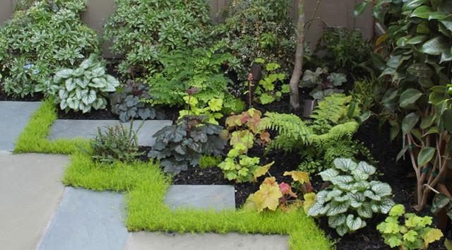 Shaded entry courtyard contemporary garden san for Shady courtyard garden design