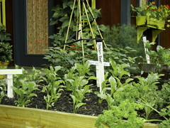 How to Start a Cool-Season Vegetable Garden