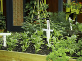 rustic landscape Cool Season Vegetables: How to Grow Beets (4 photos)