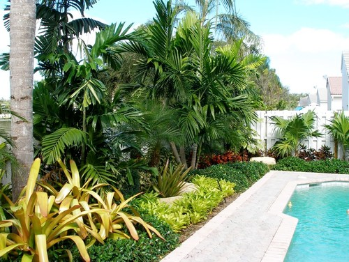 Gardening by the poolside practical tips for Tropical pool gardens