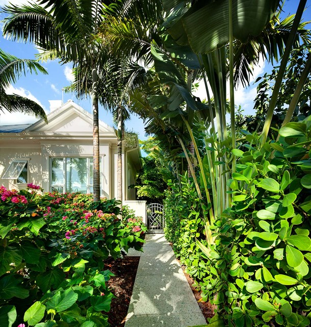 Side Yard Entry Tropical Landscape Tampa By Dwy
