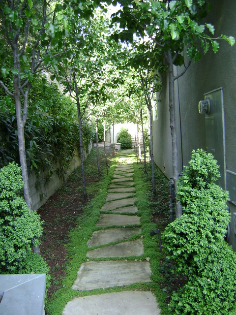 Narrow Backyard Trees : Silicon Valley 02 (Design by Myron Grossman) traditionallandscape