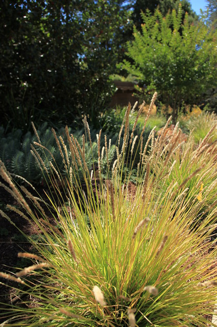 This is an example of a contemporary landscaping in San Francisco.