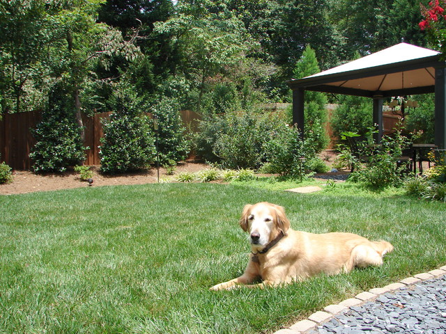 Sink your paws (or toes)  into this cool, thick lawn traditional-landscape
