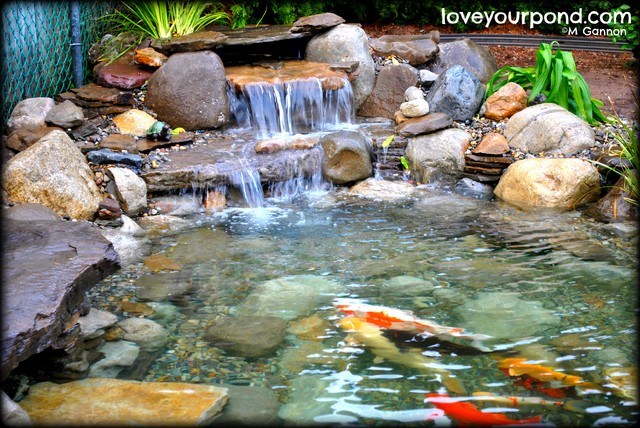 slabstone koi pond by full service aquatics traditional