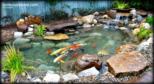 Slabstone koi pond by full service aquatics traditional for Koi pond york