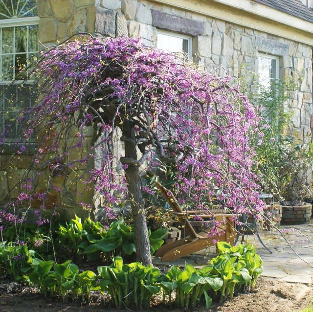Small courtyard landscape