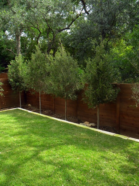 Small minimal backyard modern landscape austin by for Backyard privacy landscaping trees