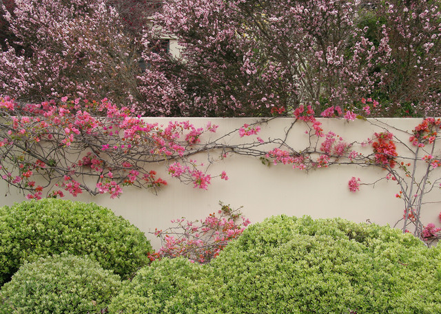 The Art Of The Espalier
