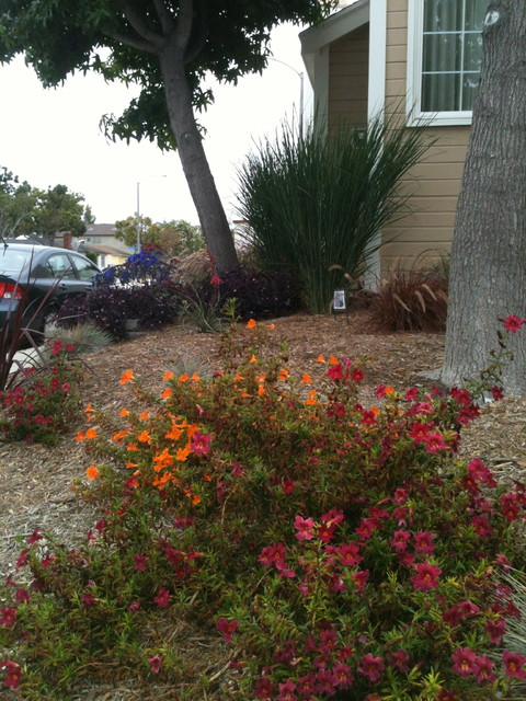 Naples ca low water low maintenance with space between for Low maintenance outside plants