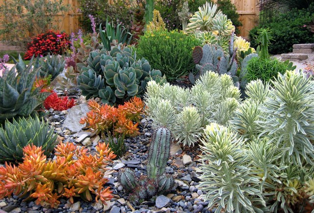 Amazing South County Succulents Contemporary Landscape