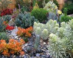 South County Succulents contemporary landscape