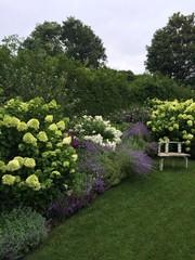 10+ Piante che Crescono Veloci per Giardino e Terrazzo