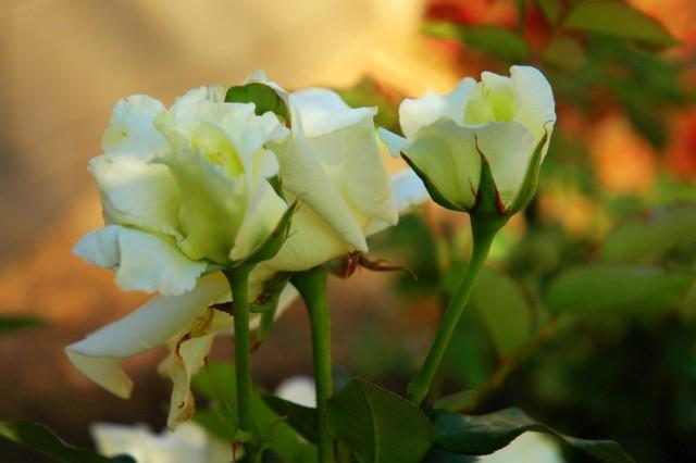 Southwest Gardener's May Checklist traditional-landscape