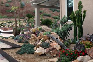Succulent Gardens Design Southwestern Landscape San