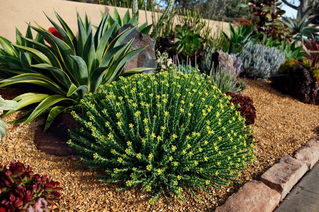 Southwestern Landscape American Southwest Garden