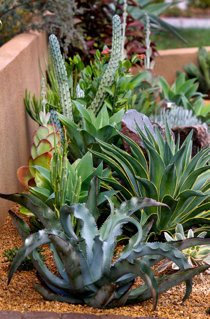 Succulent gardens design southwestern landscape san for Garden design with succulents