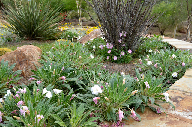 Ground Covers For Southwestern Landscapes