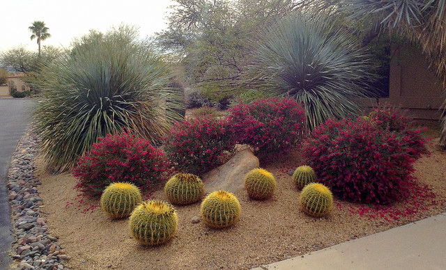 Paint the southwest winter garden in color - Flowers native to greece a sea of color ...