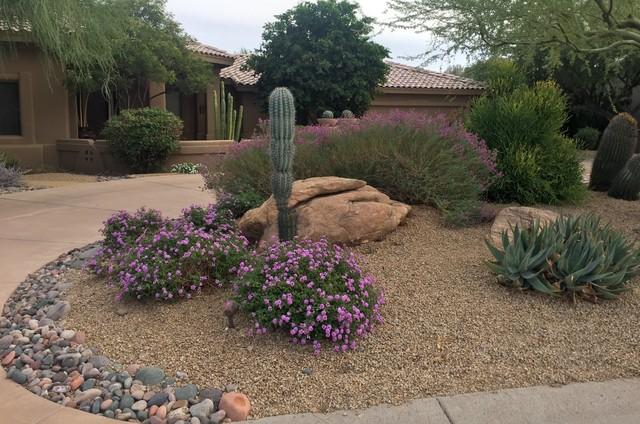 Southwestern plants for Southwest landscaping plants