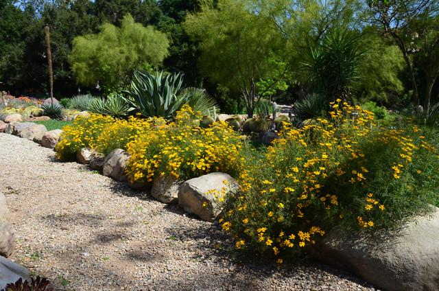 Fall Blooming Shrubs For Southwest Gardens, Southwest Garden Plants