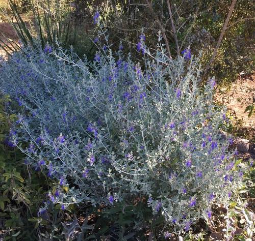 Southwestern Plants - How To Create A Southwestern Desert Landscape Design