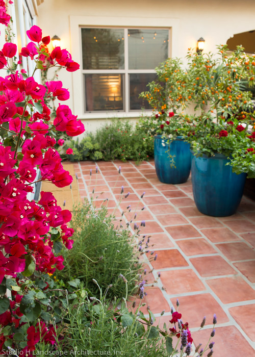 Here is a list of vines & climbing plants that flower for